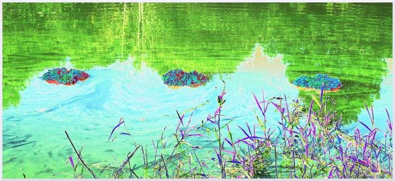 Land art Hydrangea, Michel Jobard